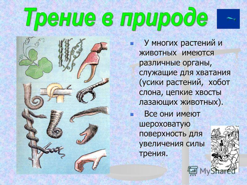 У многих растений и животных имеются различные органы, служащие для хватания (усики растений, хобот слона, цепкие хвосты лазающих животных). Все они имеют шероховатую поверхность для увеличения силы трения.