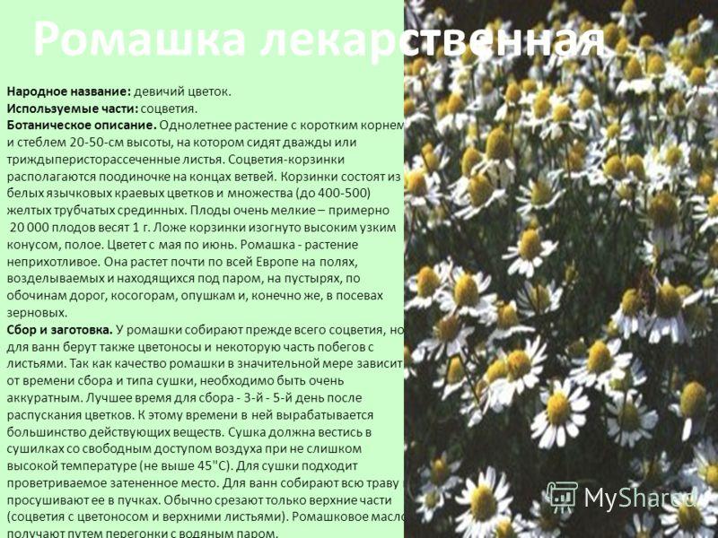 Народное название: девичий цветок. Используемые части: соцветия. Ботаническое описание. Однолетнее растение с коротким корнем и стеблем 20-50-см высоты, на котором сидят дважды или триждыперисторассеченные листья. Соцветия-корзинки располагаются поод