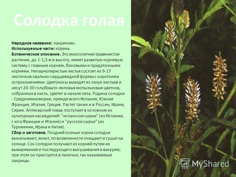Народное название: лакричник. Используемые части: корень. Ботаническое описание. Это многолетнее травянистое растение, до 1-1,5 м в высоту, имеет развитую корневую систему с главным корнем, боковыми и придаточными корнями. Непарноперистые листья сост