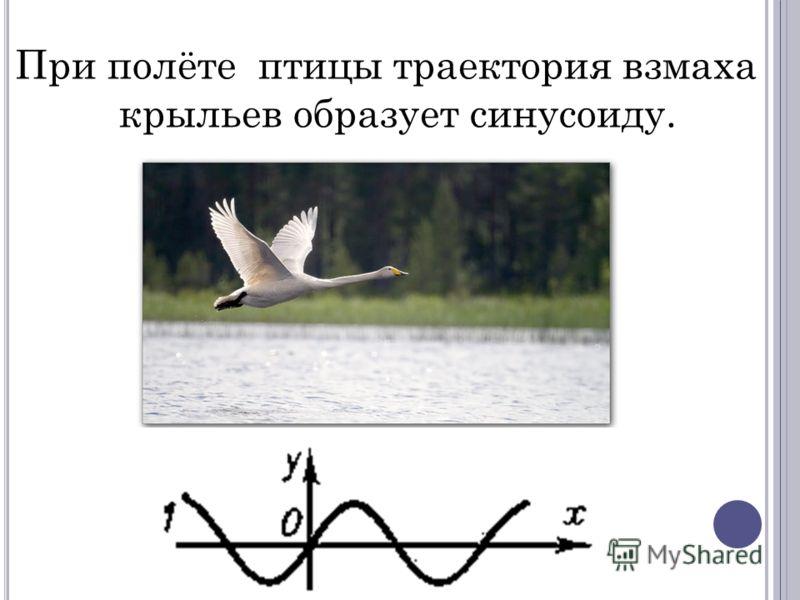 При полёте птицы траектория взмаха крыльев образует синусоиду.
