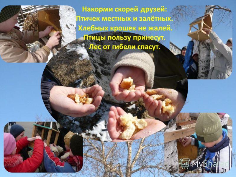 Накорми скорей друзей: Птичек местных и залётных. Хлебных крошек не жалей. Птицы пользу принесут. Лес от гибели спасут.