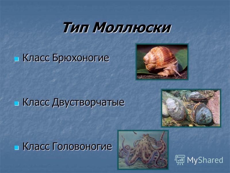 Моллюски сообщение по биологии