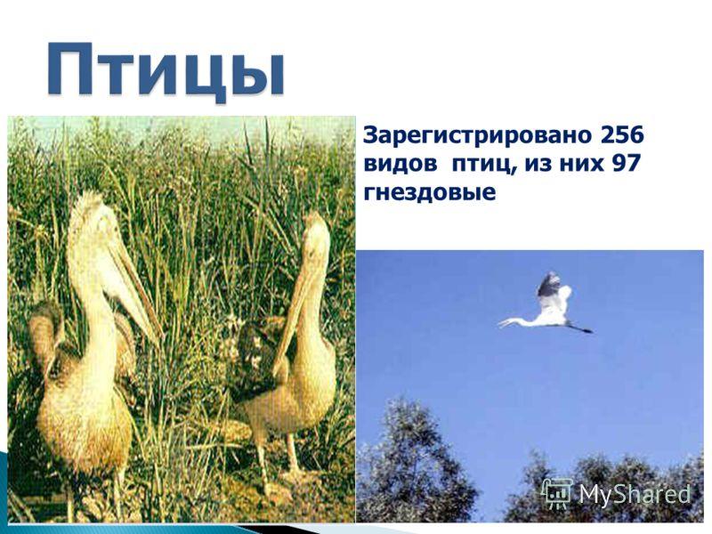Зарегистрировано 256 видов птиц, из них 97 гнездовые