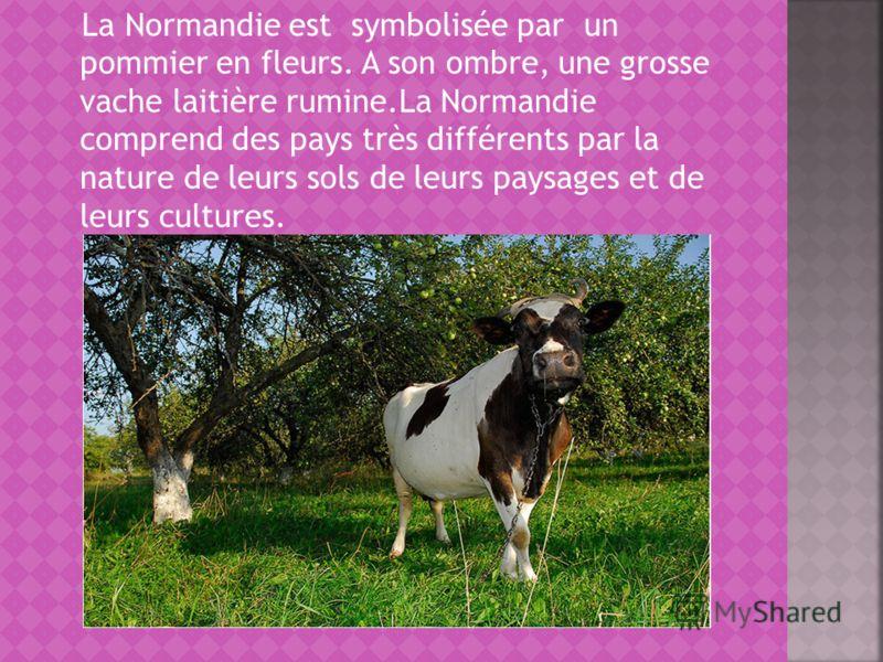 La Normandie est symbolisée par un pommier en fleurs. A son ombre, une grosse vache laitière rumine.La Normandie comprend des pays très différents par la nature de leurs sols de leurs paysages et de leurs cultures.