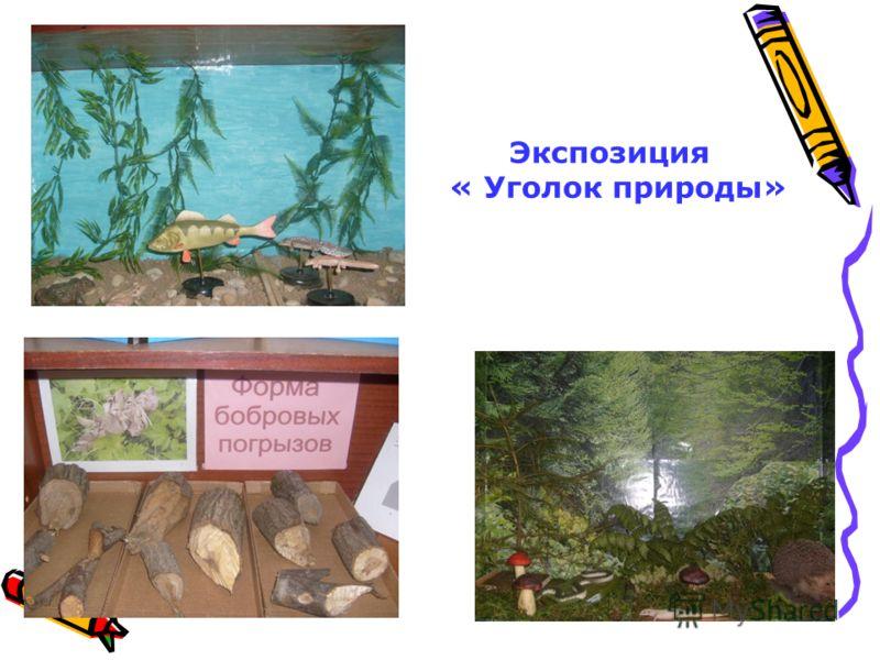 Экспозиция « Уголок природы»