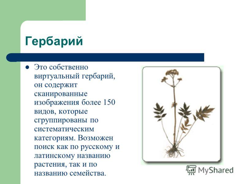 Гербарий Это собственно виртуальный гербарий, он содержит сканированные изображения более 150 видов, которые сгруппированы по систематическим категориям. Возможен поиск как по русскому и латинскому названию растения, так и по названию семейства.