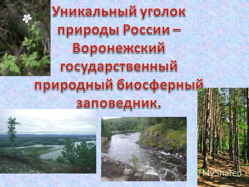 Воронежский заповедник презентация