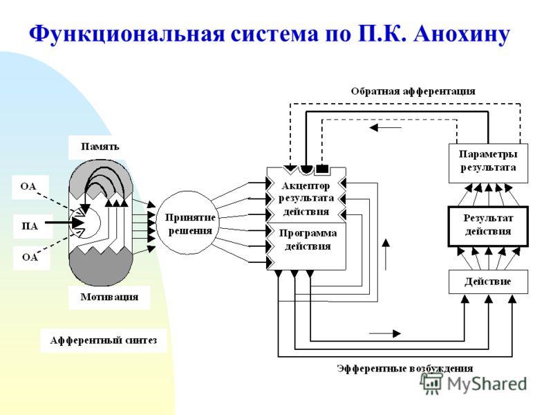 Функциональная система по П.К. Анохину