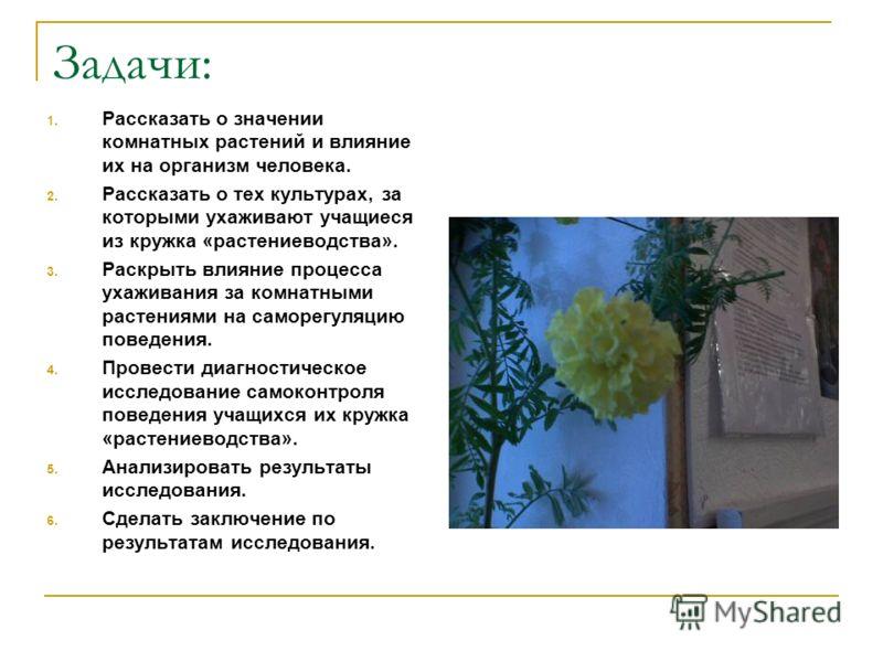 Задачи: 1. Рассказать о значении комнатных растений и влияние их на организм человека. 2. Рассказать о тех культурах, за которыми ухаживают учащиеся из кружка «растениеводства». 3. Раскрыть влияние процесса ухаживания за комнатными растениями на само