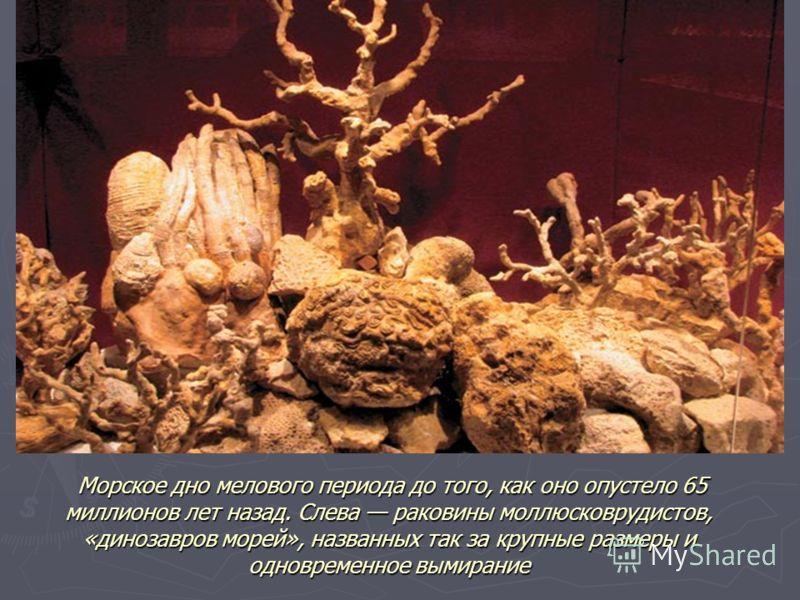 Морское дно мелового периода до того, как оно опустело 65 миллионов лет назад. Слева раковины моллюсковрудистов, «динозавров морей», названных так за крупные размеры и одновременное вымирание Морское дно мелового периода до того, как оно опустело 65