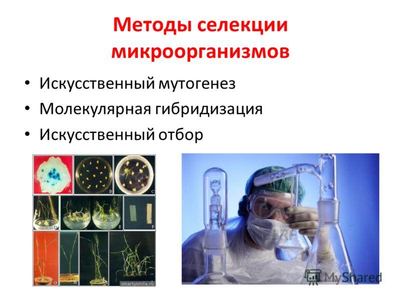 Методы селекции микроорганизмов Искусственный мутогенез Молекулярная гибридизация Искусственный отбор