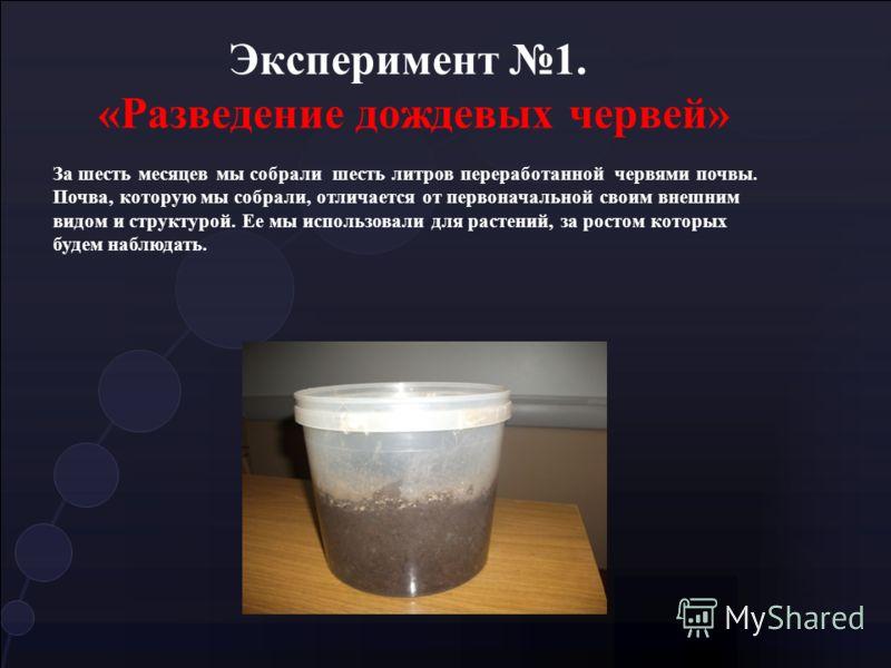 Эксперимент 1. «Разведение дождевых червей» За шесть месяцев мы собрали шесть литров переработанной червями почвы. Почва, которую мы собрали, отличается от первоначальной своим внешним видом и структурой. Ее мы использовали для растений, за ростом ко