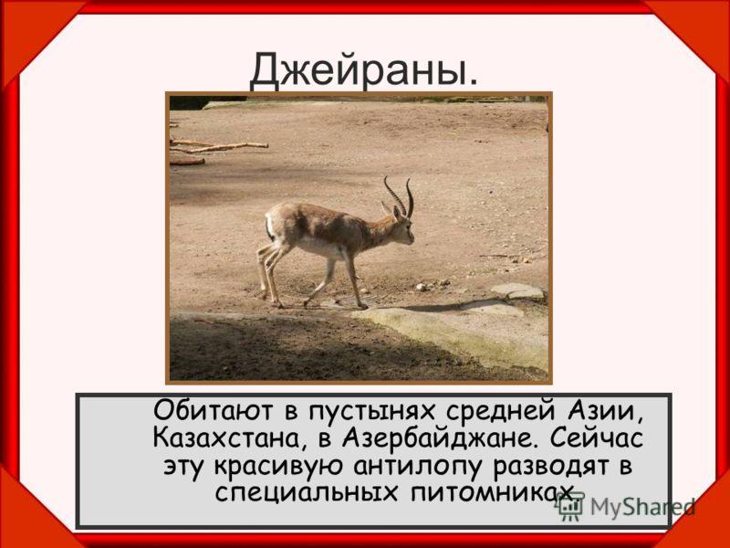 Джейраны. Обитают в пустынях средней Азии, Казахстана, в Азербайджане. Сейчас эту красивую антилопу разводят в специальных питомниках.