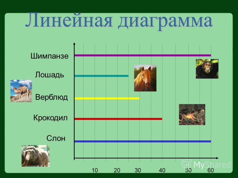 Шимпанзе Крокодил Слон Верблюд Лошадь 102030405060