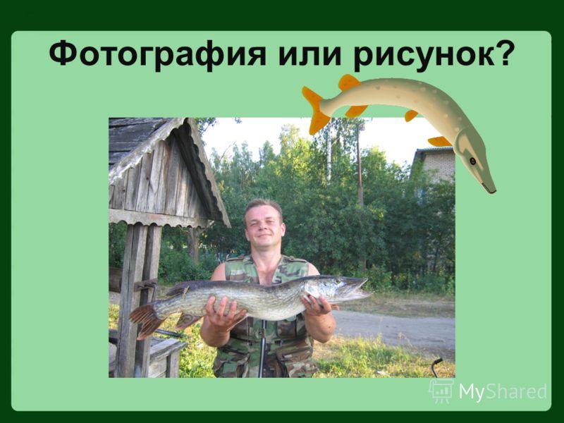 Фотография или рисунок?