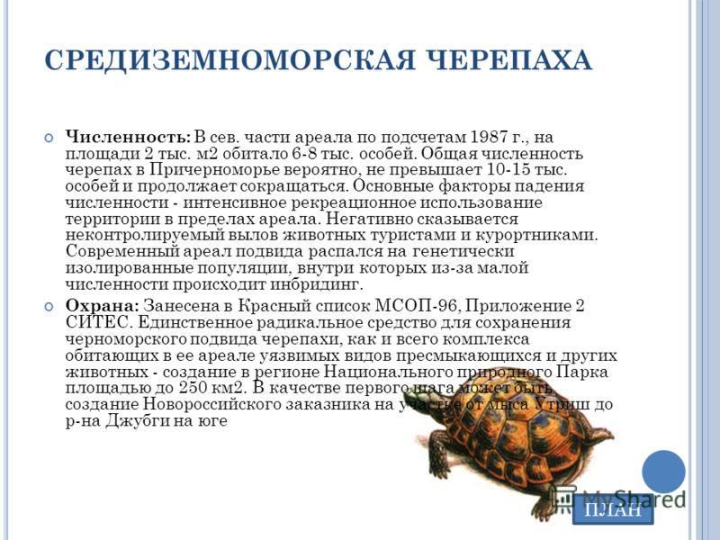 СРЕДИЗЕМНОМОРСКАЯ ЧЕРЕПАХА Численность: В сев. части ареала по подсчетам 1987 г., на площади 2 тыс. м2 обитало 6-8 тыс. особей. Общая численность черепах в Причерноморье вероятно, не превышает 10-15 тыс. особей и продолжает сокращаться. Основные факт