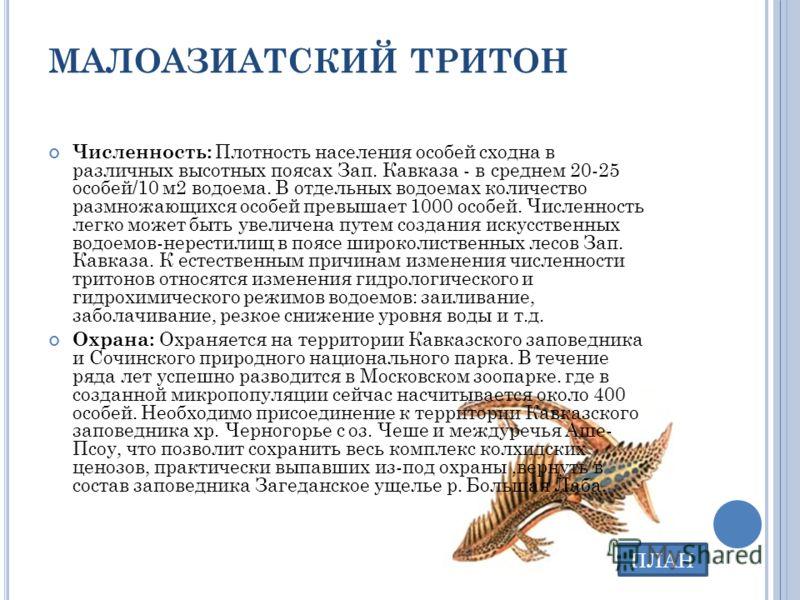 МАЛОАЗИАТСКИЙ ТРИТОН Численность: Плотность населения особей сходна в различных высотных поясах Зап. Кавказа - в среднем 20-25 особей/10 м2 водоема. В отдельных водоемах количество размножающихся особей превышает 1000 особей. Численность легко может