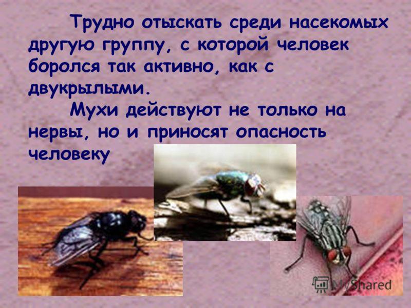 Трудно отыскать среди насекомых другую группу, с которой человек боролся так активно, как с двукрылыми. Мухи действуют не только на нервы, но и приносят опасность человеку