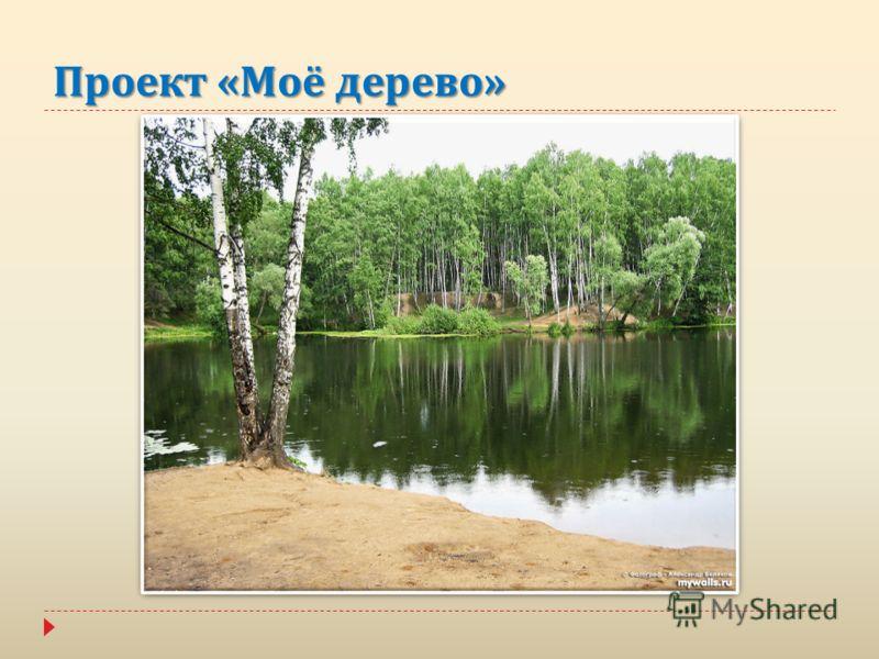 Проект « Моё дерево »