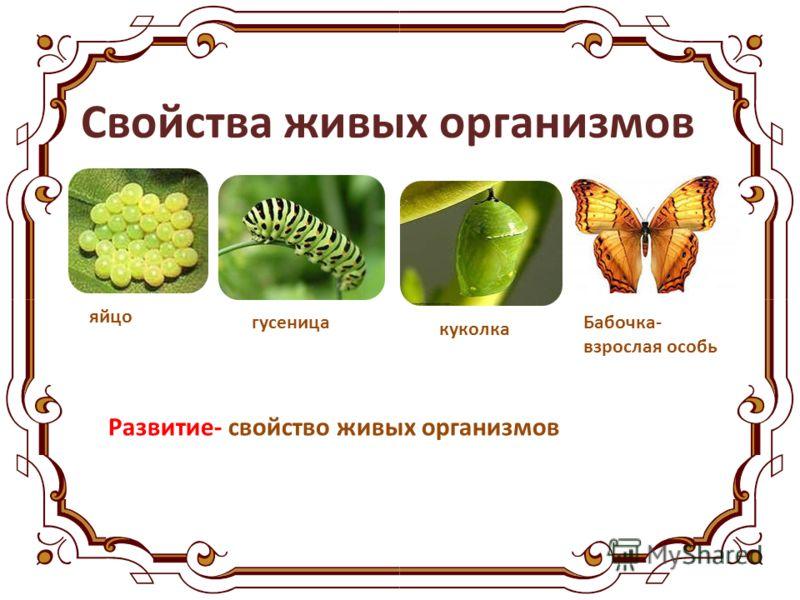 Свойства живых организмов яйцо гусеница куколка Бабочка- взрослая особь Развитие- свойство живых организмов