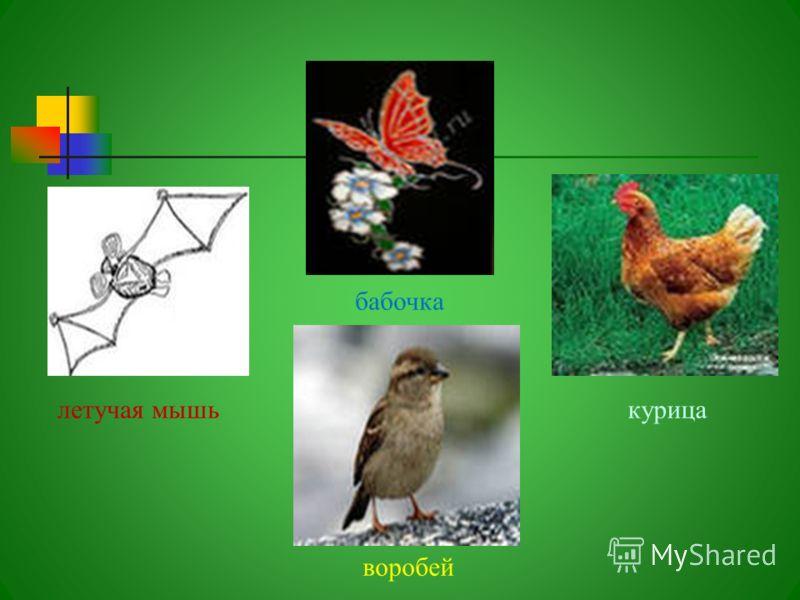 летучая мышь бабочка воробей курица