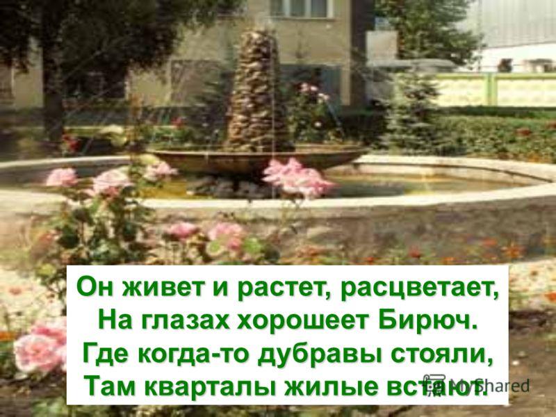Он живет и растет, расцветает, На глазах хорошеет Бирюч. Где когда-то дубравы стояли, Там кварталы жилые встают.