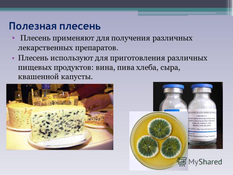 Полезная плесень Плесень применяют для получения различных лекарственных препаратов. Плесень используют для приготовления различных пищевых продуктов: вина, пива хлеба, сыра, квашенной капусты.
