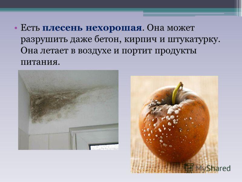 Есть плесень нехорошая. Она может разрушить даже бетон, кирпич и штукатурку. Она летает в воздухе и портит продукты питания.
