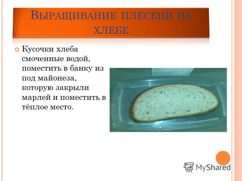 Кусочки хлеба смоченные водой, поместить в банку из под майонеза, которую закрыли марлей и поместить в тёплое место.