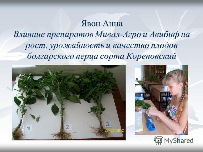 Явон Анна Влияние препаратов Мивал-Агро и Авибиф на рост, урожайность и качество плодов болгарского перца сорта Кореновский