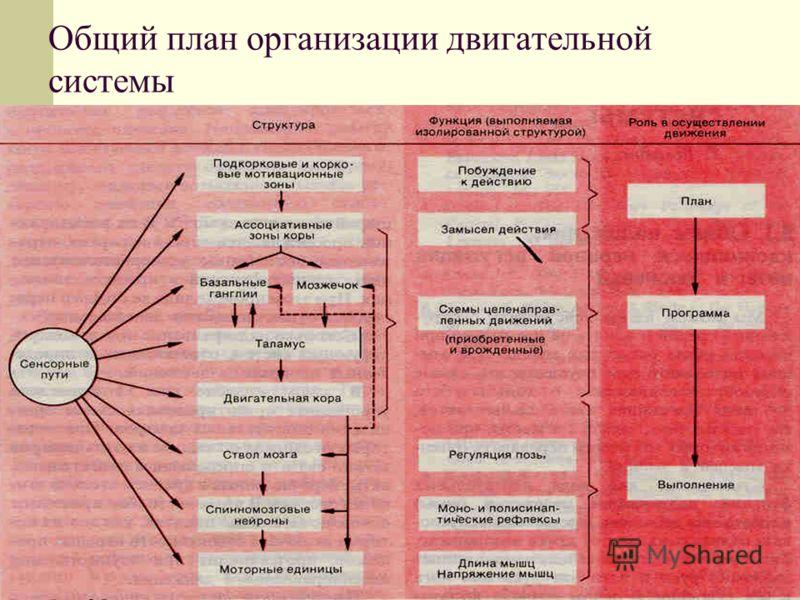 Общий план организации двигательной системы