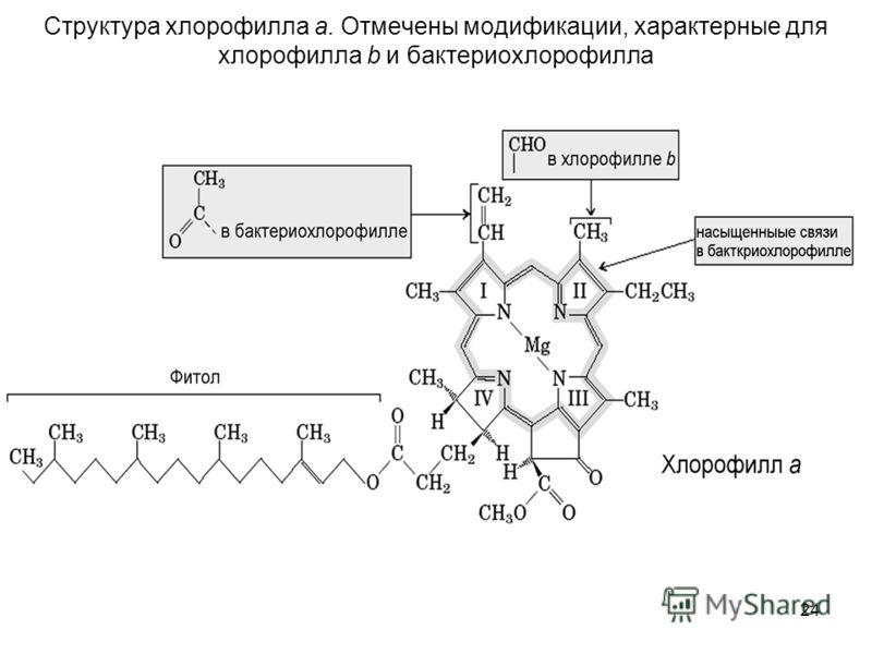 24 Структура хлорофилла а. Отмечены модификации, характерные для хлорофилла b и бактериохлорофилла
