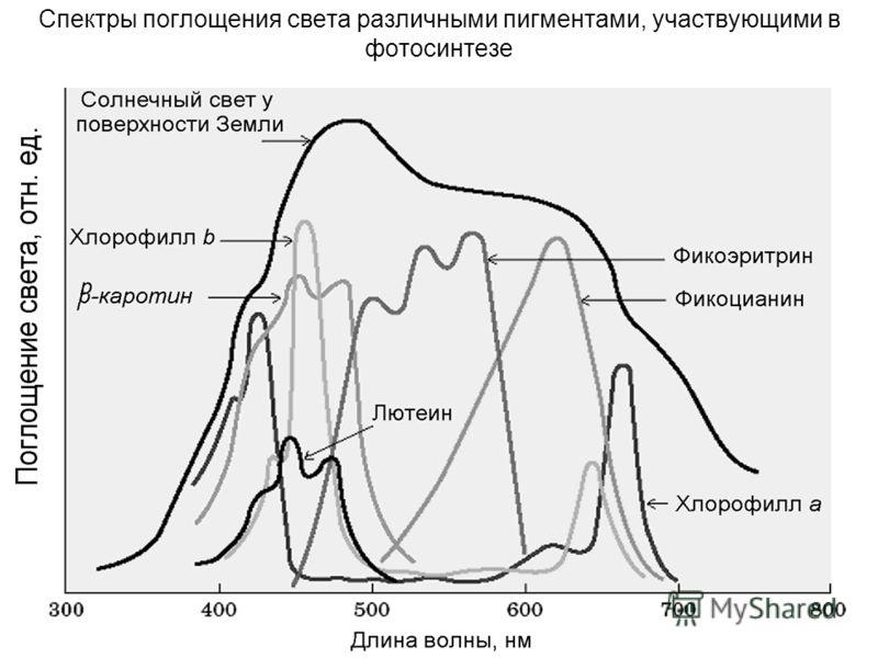 29 Спектры поглощения света различными пигментами, участвующими в фотосинтезе