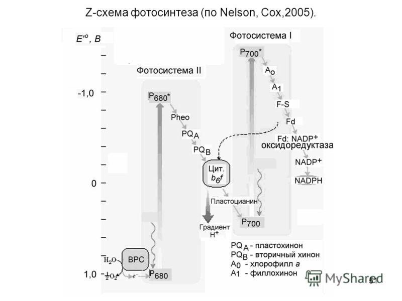 51 Z-схема фотосинтеза (по Nelson, Cox,2005).