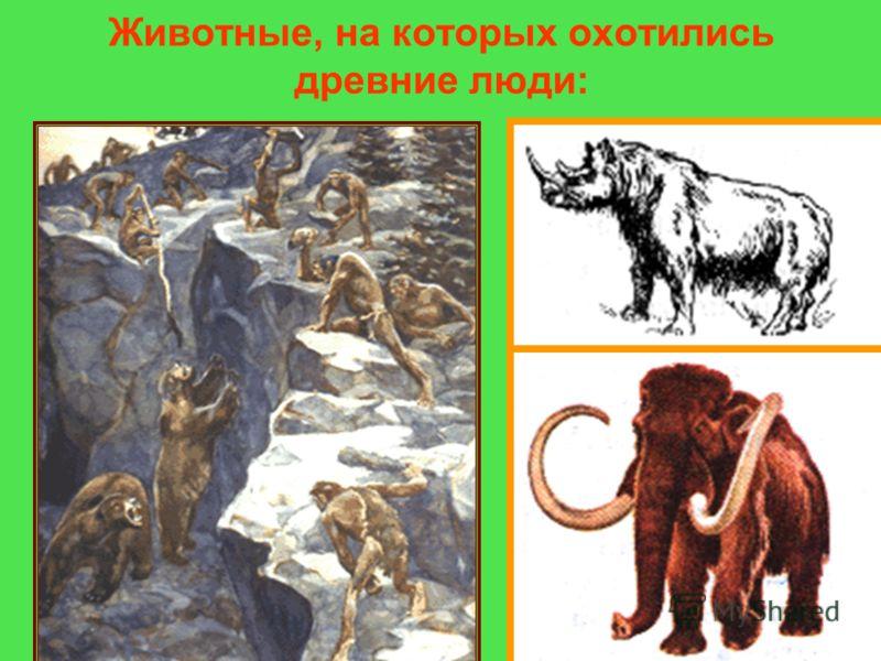 Животные, на которых охотились древние люди: