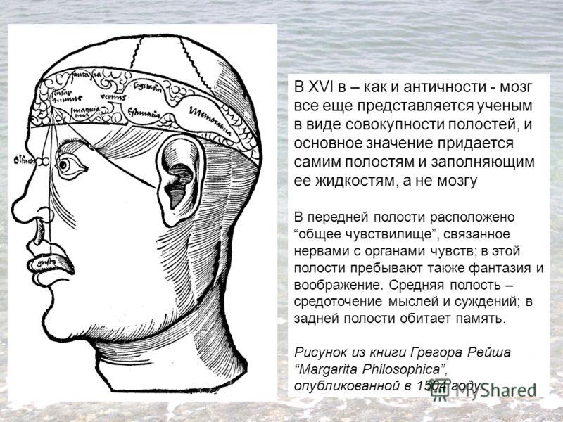В XVI в – как и античности - мозг все еще представляется ученым в виде совокупности полостей, и основное значение придается самим полостям и заполняющим ее жидкостям, а не мозгу В передней полости расположено общее чувствилище, связанное нервами с ор