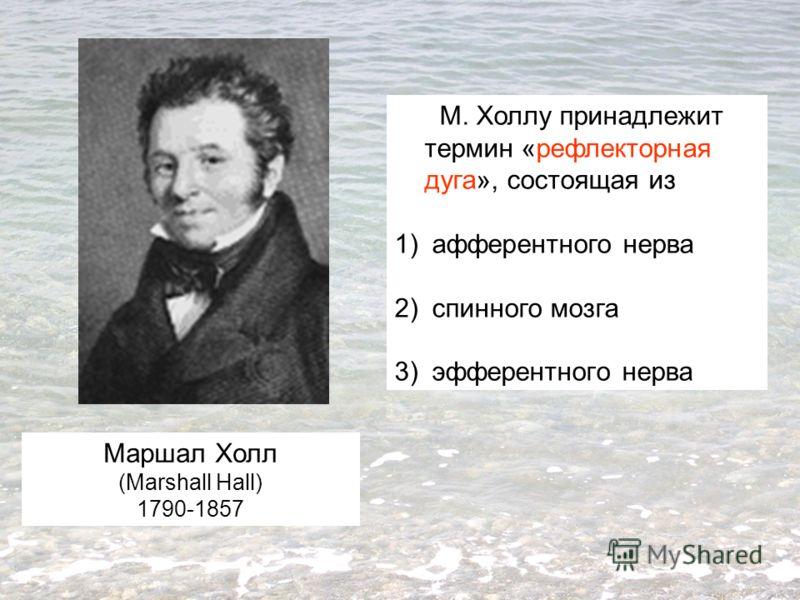 Маршал Холл (Marshall Hall) 1790-1857 М. Холлу принадлежит термин «рефлекторная дуга», состоящая из 1) афферентного нерва 2) спинного мозга 3) эфферентного нерва