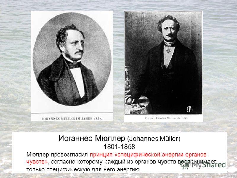 Иоганнес Мюллер (Johannes Müller) 1801-1858 Мюллер провозгласил принцип «специфической энергии органов чувств», согласно которому каждый из органов чувств воспринимает только специфическую для него энергию.