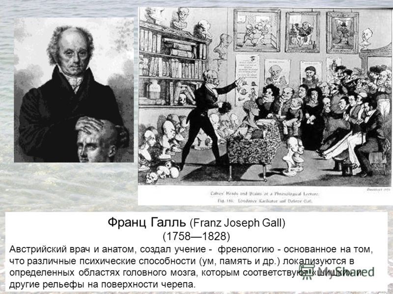 Франц Галль (Franz Joseph Gall) (17581828) Австрийский врач и анатом, создал учение - френологию - основанное на том, что различные психические способности (ум, память и др.) локализуются в определенных областях головного мозга, которым соответствуют