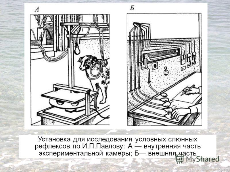 Установка для исследования условных слюнных рефлексов по И.П.Павлову: А внутренняя часть экспериментальной камеры; Б внешняя часть