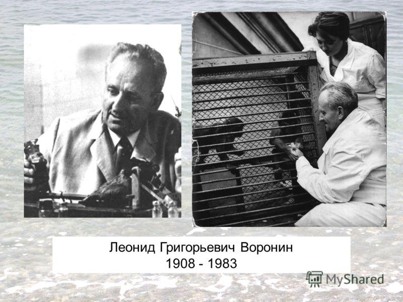 Леонид Григорьевич Воронин 1908 - 1983