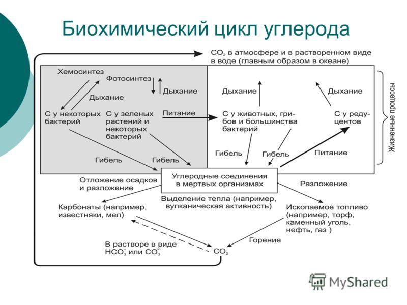 Биохимический цикл углерода