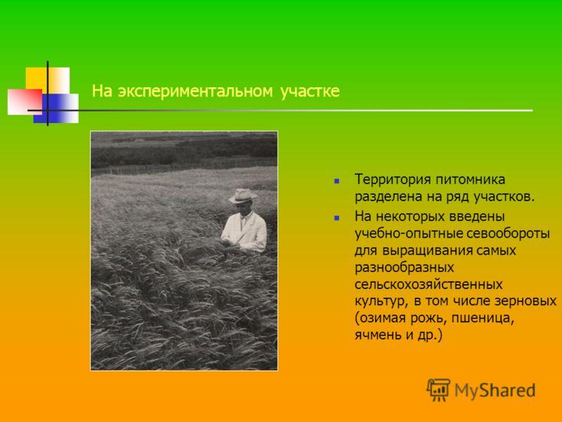 На экспериментальном участке Территория питомника разделена на ряд участков. На некоторых введены учебно-опытные севообороты для выращивания самых разнообразных сельскохозяйственных культур, в том числе зерновых (озимая рожь, пшеница, ячмень и др.)