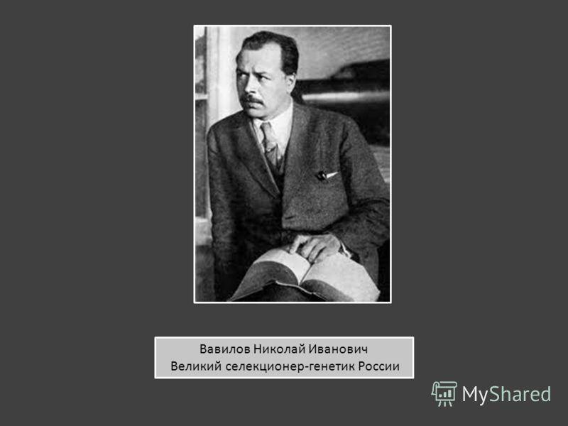 Вавилов Николай Иванович Великий селекционер-генетик России