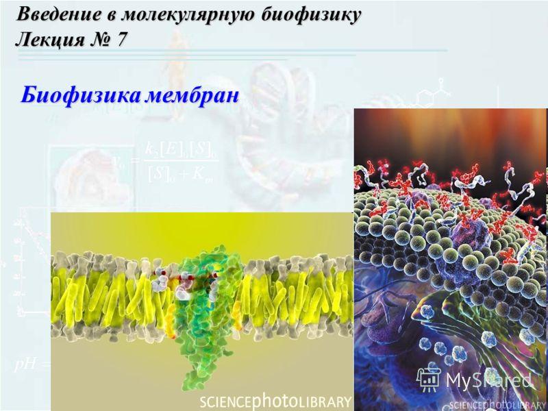 Введение в молекулярную биофизику Лекция 7 Биофизика мембран