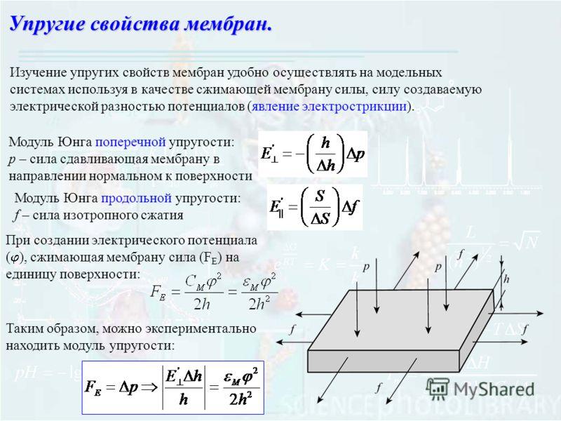 Изучение упругих свойств мембран удобно осуществлять на модельных системах используя в качестве сжимающей мембрану силы, силу создаваемую электрической разностью потенциалов (явление электрострикции). Модуль Юнга поперечной упругости: p – сила сдавли