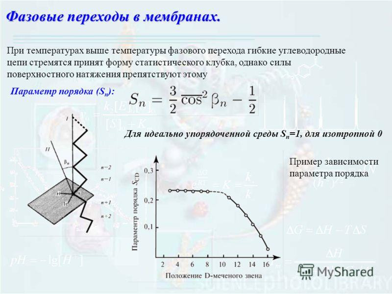 Фазовые переходы в мембранах. При температурах выше температуры фазового перехода гибкие углеводородные цепи стремятся принят форму статистического клубка, однако силы поверхностного натяжения препятствуют этому Параметр порядка (S n ): Для идеально
