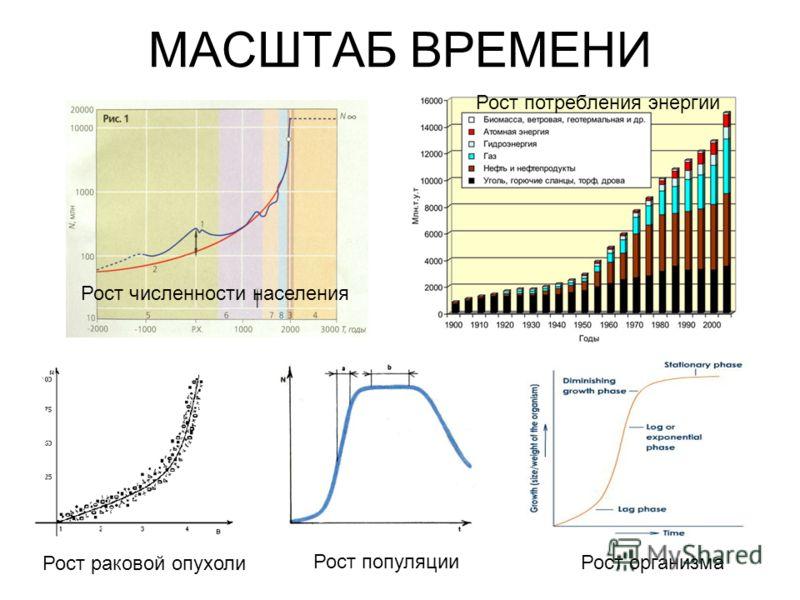 МАСШТАБ ВРЕМЕНИ Рост раковой опухоли Рост популяции Рост организма Рост численности населения Рост потребления энергии