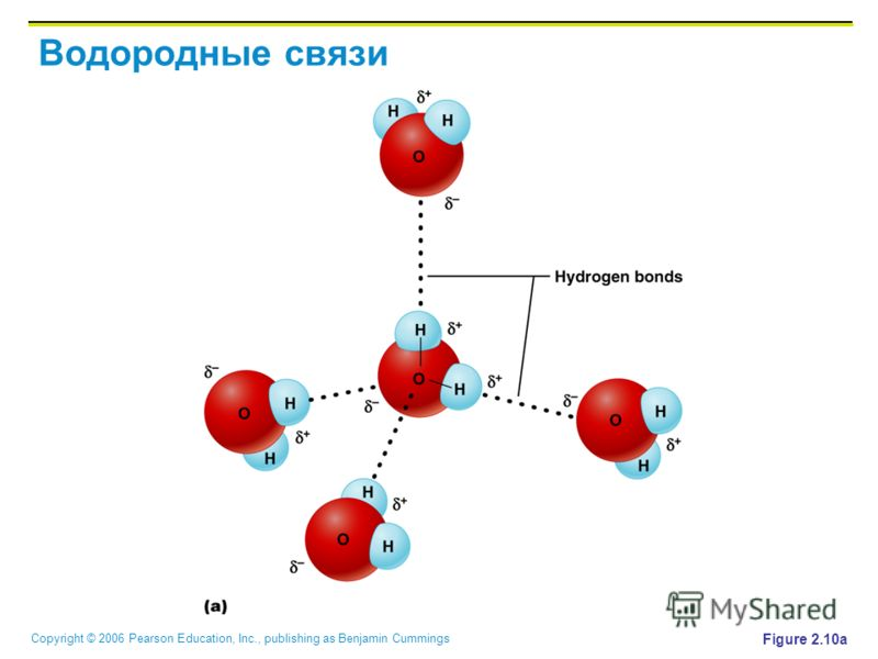 Copyright © 2006 Pearson Education, Inc., publishing as Benjamin Cummings Водородные связи Figure 2.10a