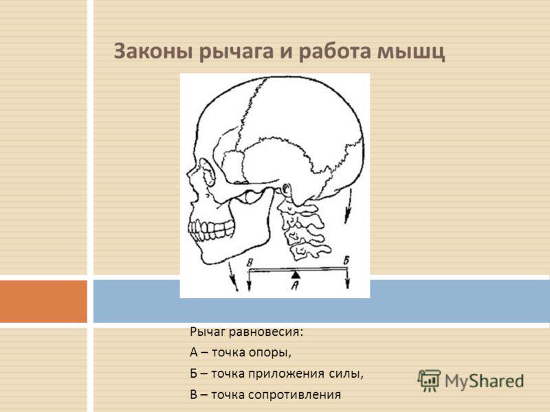 Законы рычага и работа мышц Удержание груза в кисти рук – наглядный пример рычага. Локтевой сустав – рычаг II рода. Задача впервые была решена Леонардо да Винчи. Природа устроила локтевой сустав так, чтобы человек проигрывал в усилии. В данном случае